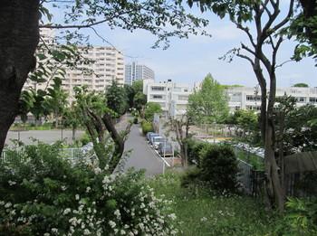 kanigawa1_1.jpg